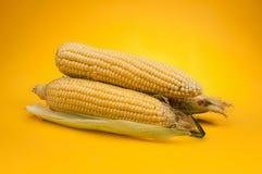 Corn. Fresh corn on yellow background Stock Photos