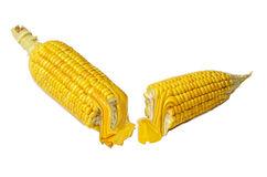 Corn fruit and fresh oil Stock Image