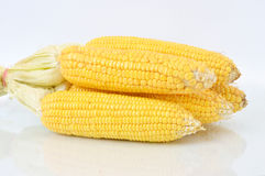 Corn fruit Royalty Free Stock Photo