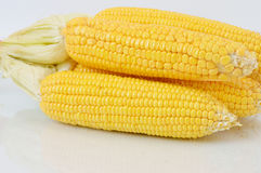 Corn fruit Stock Photo