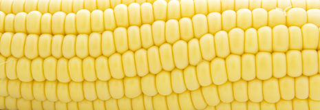 Corn, full frame Royalty Free Stock Photos