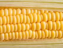 Corn grain Royalty Free Stock Photo