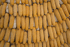Corn grain abstract. Background texture grain corn fall stock photography