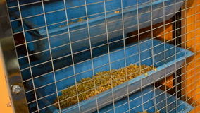 Corn grain in blue container device, equipment, stock video footage