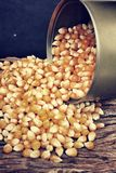 Corn grain Royalty Free Stock Image