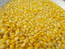 Corn grain Stock Image