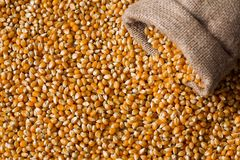 Corn grain close up top view. Yellow corn grain close up top view Royalty Free Stock Image