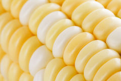 Corn grain closeup Royalty Free Stock Images