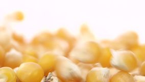 Corn grain fill capacity. Close up. White. Slow motion. Corn kernels fall down and form a mound, refined grain of corn fall down and fly off to the side, falling stock video