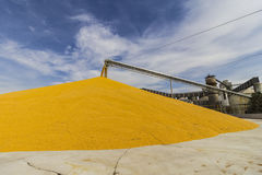 Corn and Grain Handling or Harvesting Terminal. Corn Can be Used for Food, Feed or Ethanol I Stock Images