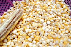 Corn grain Royalty Free Stock Photography