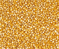 Corn grains Stock Photo