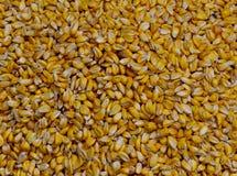 Corn grains background Royalty Free Stock Photos