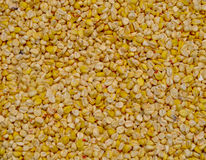 Corn grains background Royalty Free Stock Images