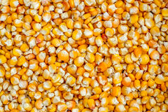 Corn grains. Can be used as a background Stock Photo