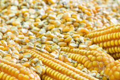 Corn grains. For food industry Royalty Free Stock Photo