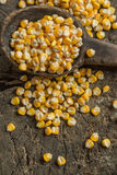 Corn grains. In a old spoon on a wooden background Royalty Free Stock Images
