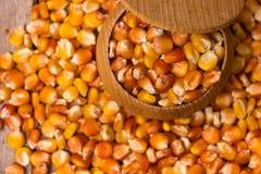 Corn grains Royalty Free Stock Photos