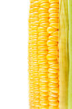 Corn, Grains of Ripe Corn Royalty Free Stock Image