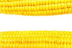 Corn, Grains of Ripe Corn Royalty Free Stock Images