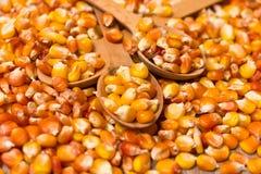 Corn grains Royalty Free Stock Image