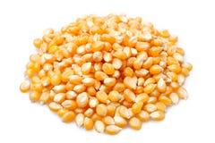 Corn grains Stock Photos