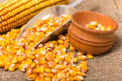 Corn grains. Yellow corn grains in a wooden pot on a wooden background Stock Image