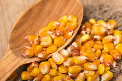 Corn grains. Yellow corn grains in a wooden spoon on a wooden background Stock Photos