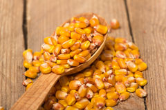 Corn grains. Yellow corn grains in a wooden spoon on a wooden background Stock Photo