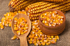 Corn grains Royalty Free Stock Photography