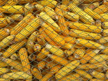 Corn in granary Stock Images