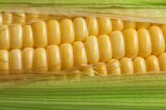 Corn with green leaf Stock Photos
