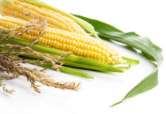 Corn with green leaves Stock Photography
