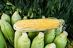 Corn and greenery for sale Stock Image