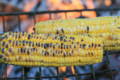 Corn grill Royalty Free Stock Image