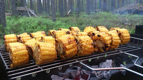 Corn on the grill Stock Photos