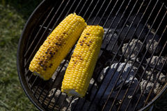 Corn on grill in park Royalty Free Stock Photos