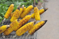 Corn  on the grill Royalty Free Stock Photography