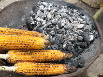 Corn Grilled. Grilled Corn in Charcoal Royalty Free Stock Photos