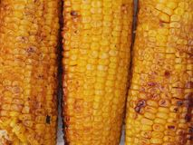 Corn grilled Stock Photography