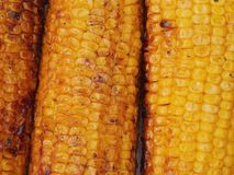 Corn grilled Royalty Free Stock Photography