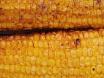 Corn grilled Royalty Free Stock Images