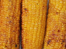Corn grilled Stock Images