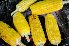 Corn grilled Royalty Free Stock Photo