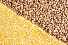 Corn grits and buckwheat background Royalty Free Stock Photography