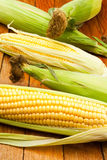 Corn group Royalty Free Stock Photography