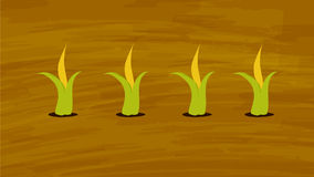 Corn growing in the farming field Vector. Agriculture and Farming. Agrotourism. Stock Photo