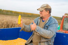 Corn in hand of farmer. Royalty Free Stock Images