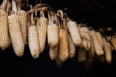 Corn hanging to dry Stock Photo