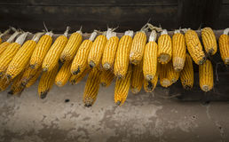 Corn hanging Royalty Free Stock Image